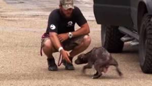 Koira pyysi omalla tavallaan pelastajia hakemaan sen pennut. Jälleennäkeminen li