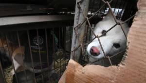 Korean viranomaiset yrittivät menestyksettä lopettaa koiranlihan myynnin talviol