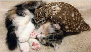 Hän hoiti pientä pöllöä, ja hankki sille seuraksi kissanpennun. Katso söpöt kuva